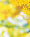 ../texture_fall_yellow_background1.jpg